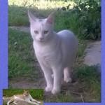 Aiuto! Il gatto di Simon vive a casa mia!